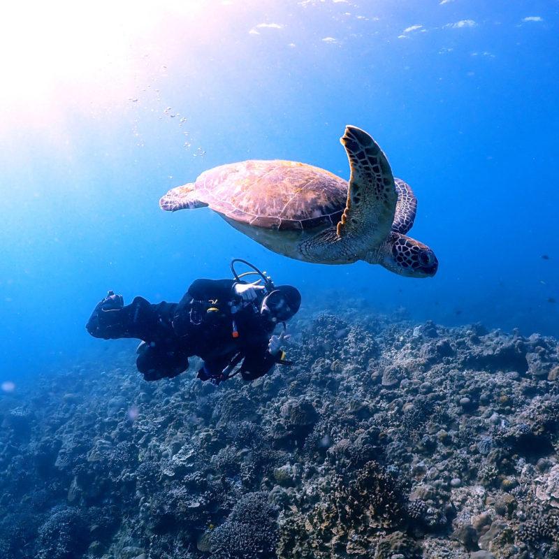 今年初ダイビングは水納島&瀬底島