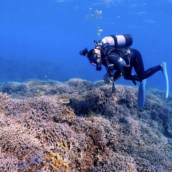 3月5日 サンゴの日 沖縄の珊瑚